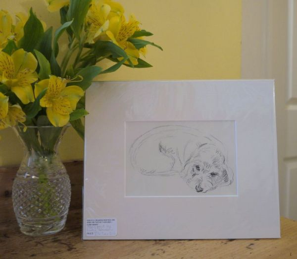 Little Wire Haired Dachs curled up - Dax D16 -  1930's print by Lucy Dawson